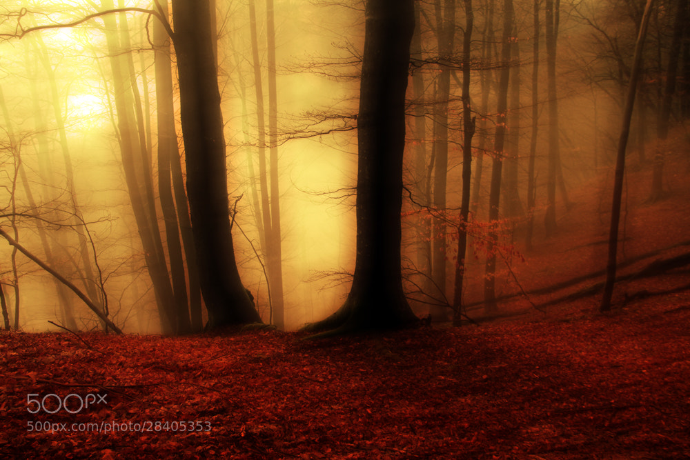 Photograph dreams by Domen  Dolenc on 500px