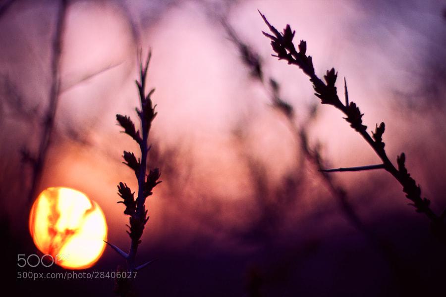 Photograph Sun and buds by Gabor Jonas on 500px