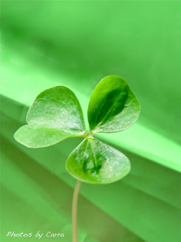 Photograph Shamrock by Carra Riley on 500px
