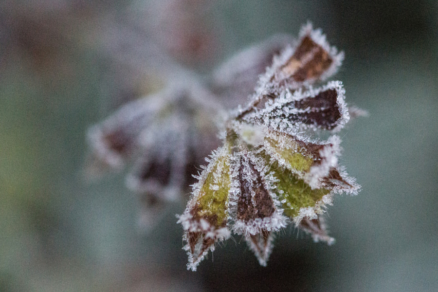 Froid matinal (Morning cold) by Christine Druesne on 500px.com