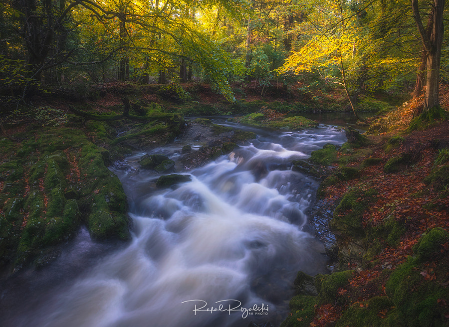 Tollymore Forest Park - Northern Ireland by Rafal Różalski on 500px.com