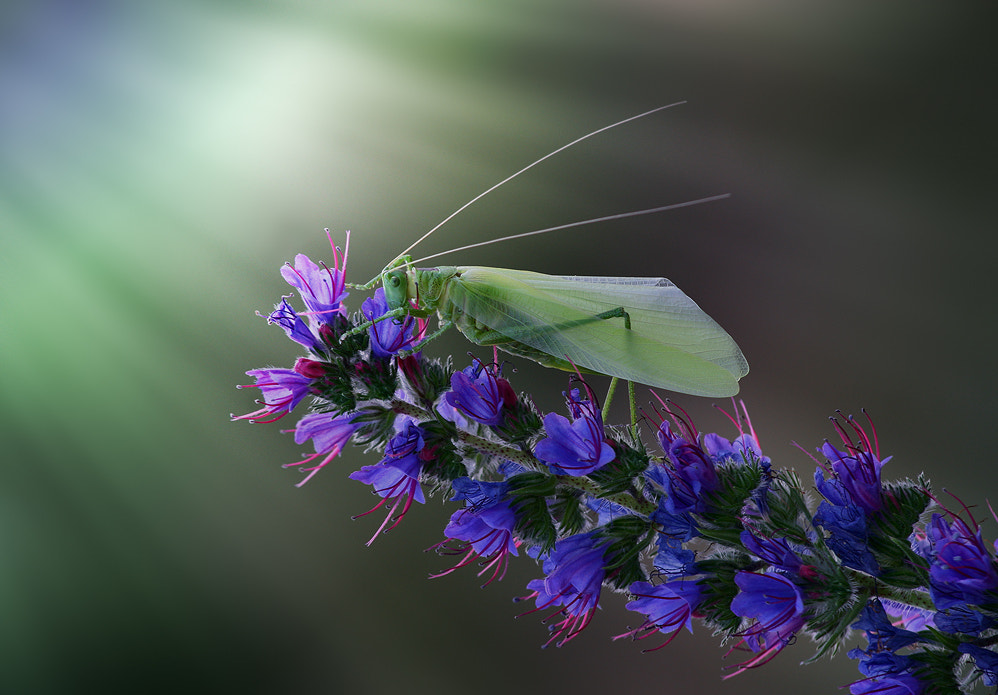 Photograph grasshopper by Vadim Trunov on 500px