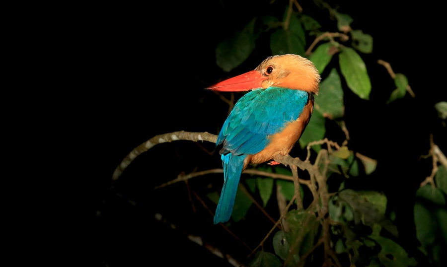 Hornbill Kingfisher.  Didn't seem to mind that we were there, as long as we didn't get too close :)