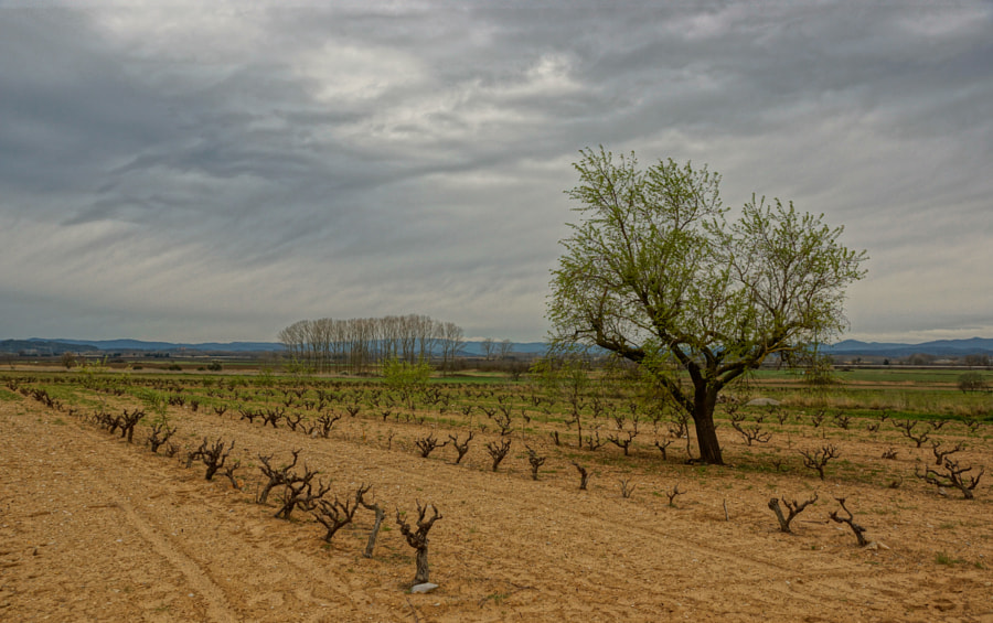 Vines, trees and distant hills