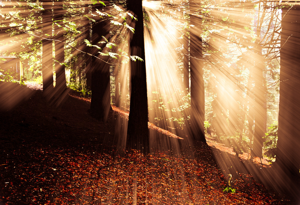 Photograph Forest light by Ryan Photography on 500px