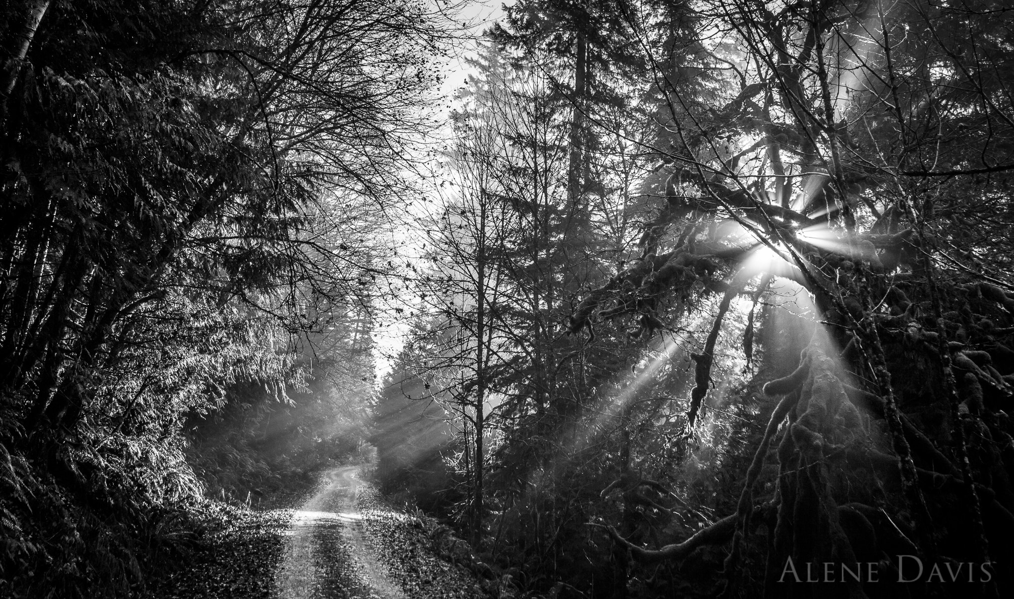 Photograph On the Road by Alene Davis on 500px
