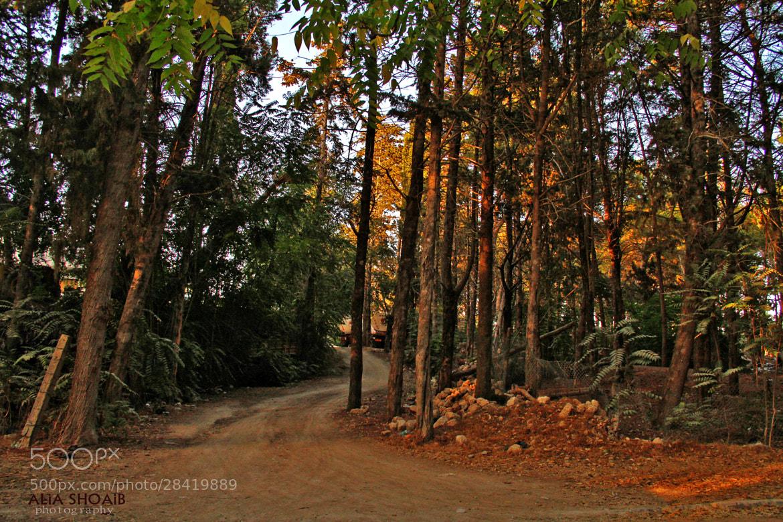 Photograph Calm nature by ALiA Shoaib on 500px