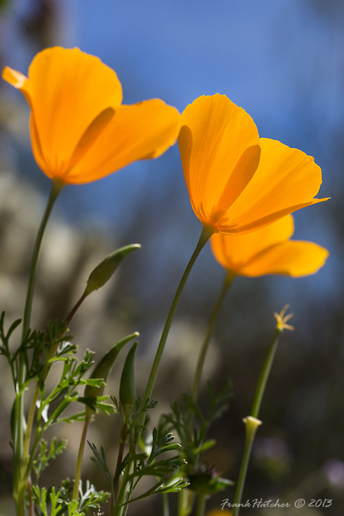 Photograph   Spring time in the desert. by Frank Hatcher on 500px