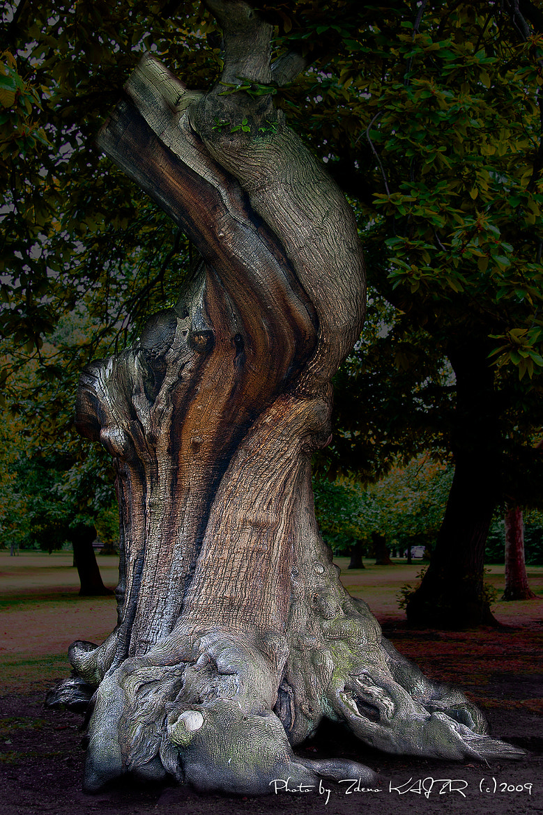 Photograph Old tree in a London park by Zdeno Kajzr on 500px