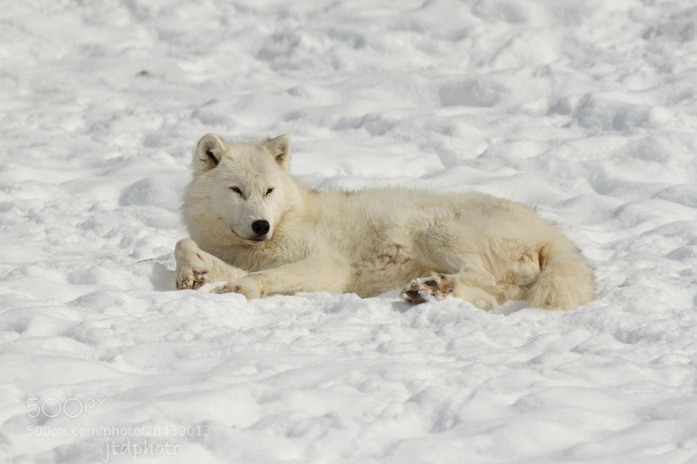 Photograph The Lazy Days of Winter 2 by Joe Davis on 500px
