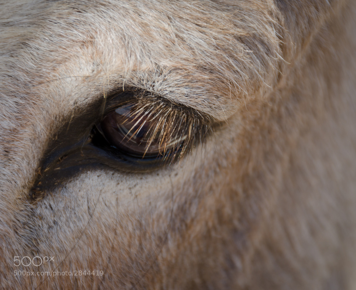 Photograph Eye of the Donkey by LaDonna Pride on 500px