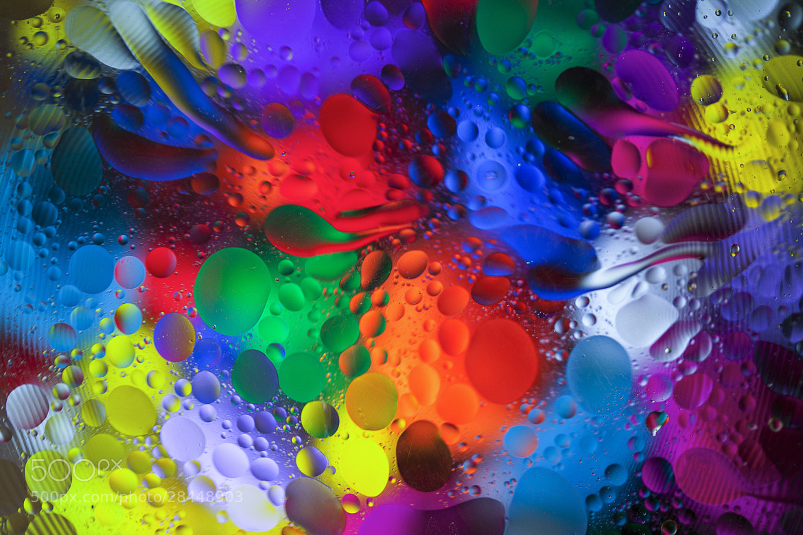Photograph Color Explosion 2 by Margaret Morgan on 500px