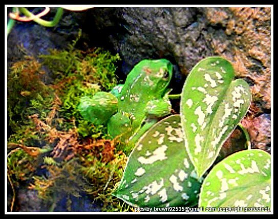 Photograph camo phytoflage by Brenda Wright on 500px