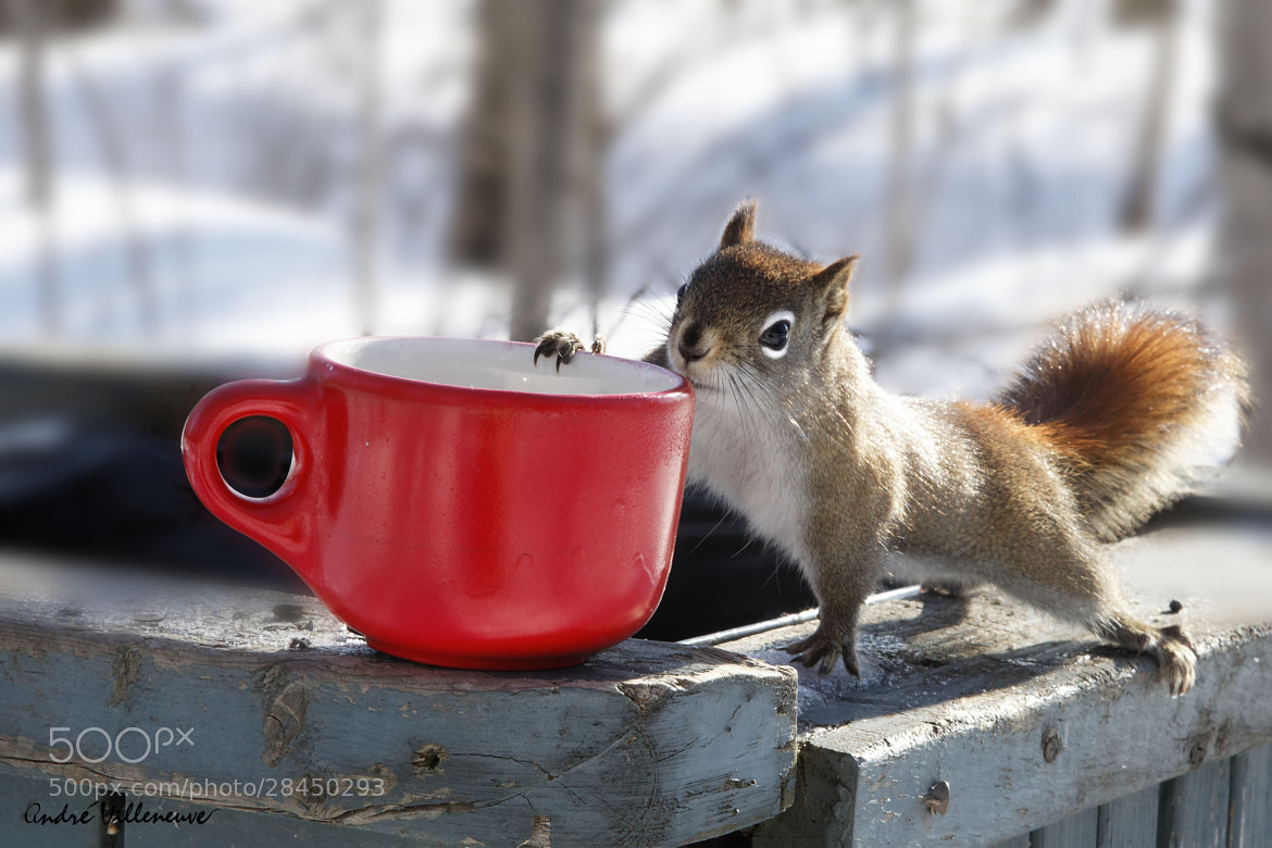 Photograph Soon, that will be spring ! by Andre Villeneuve on 500px