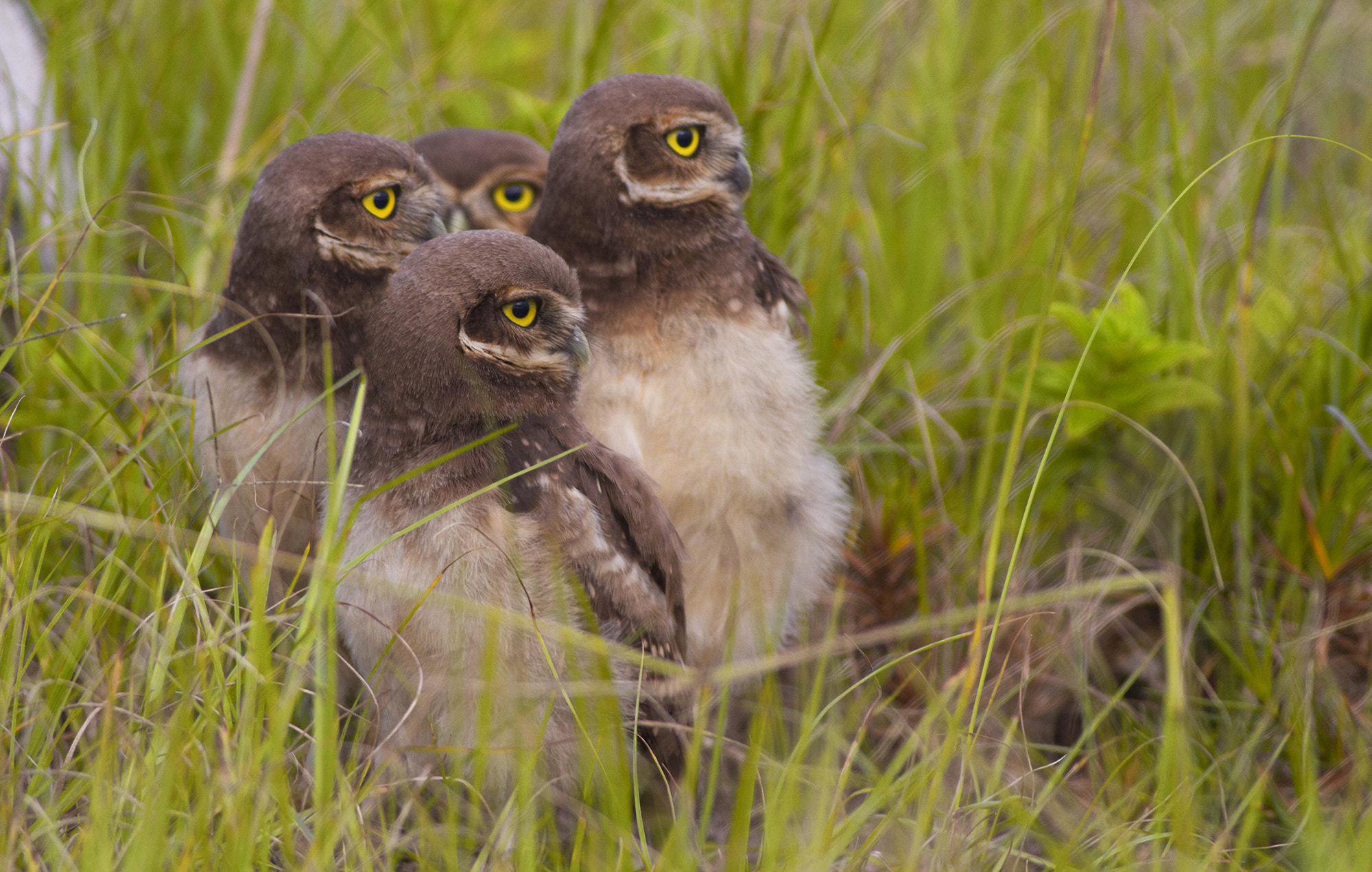 Photograph Four Eyes! by Itamar Campos on 500px