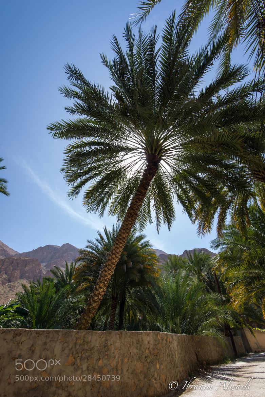 Photograph Date palm tree by Ibrahim AlWaili on 500px