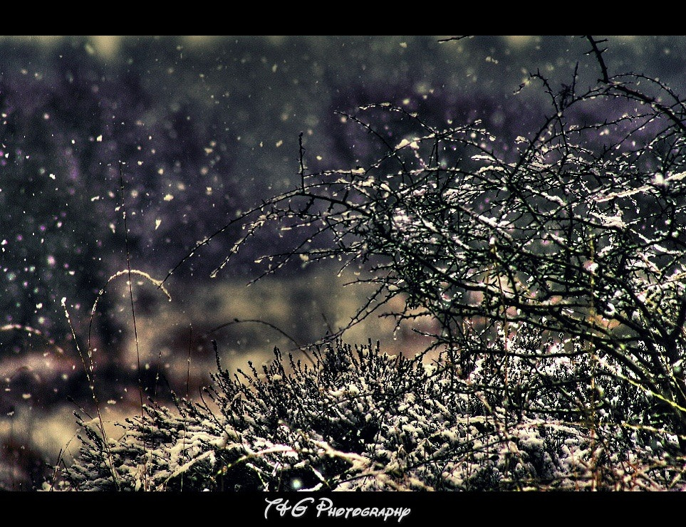 Photograph Winters grip by T&G Photography  on 500px