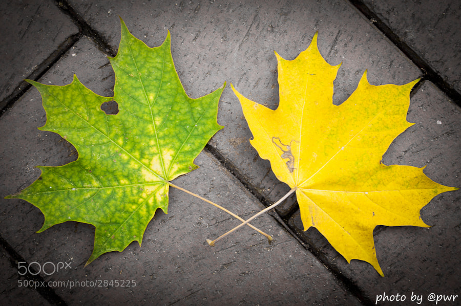 Photograph Autumn on the Streets by PWR (R) on 500px