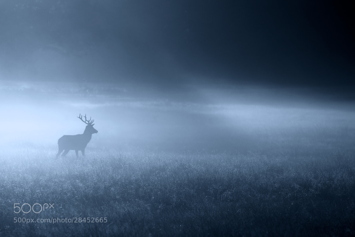 Photograph into the night by Mark Bridger on 500px