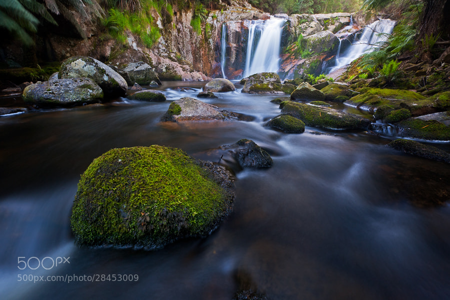 Photograph Mossy by Oxy Z on 500px