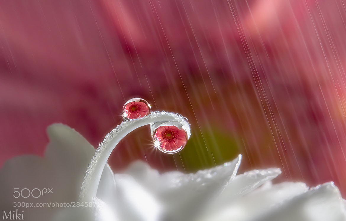 Photograph Morning Shower by Miki Asai on 500px