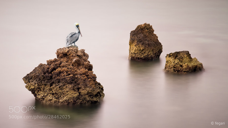 Photograph Pelican View by fegari  . on 500px