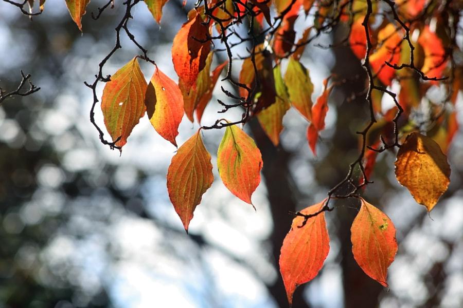 Vintage Autumn by Wayne Gerard Trotman on 500px.com