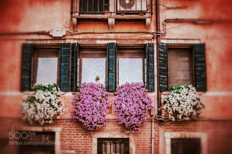 Photograph Venetian windows by Constantin Gololobov on 500px