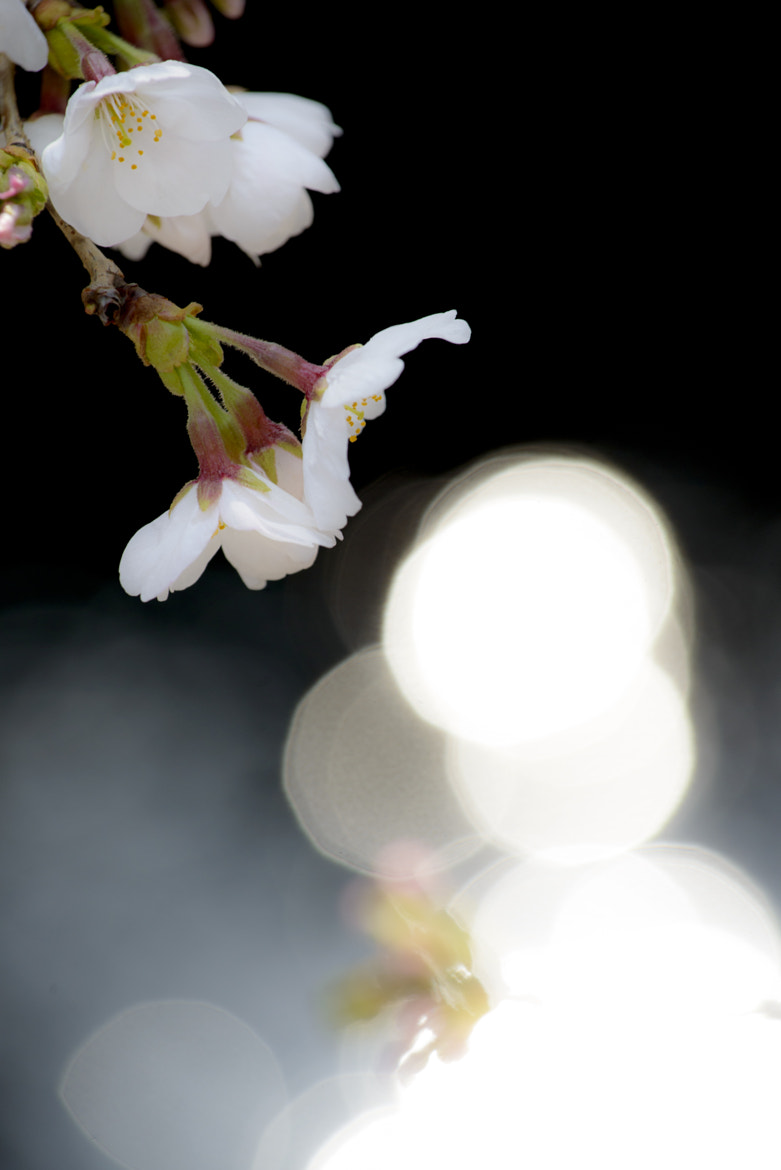 Photograph ひかりふる(Pure Bright) by hail 2 u  on 500px