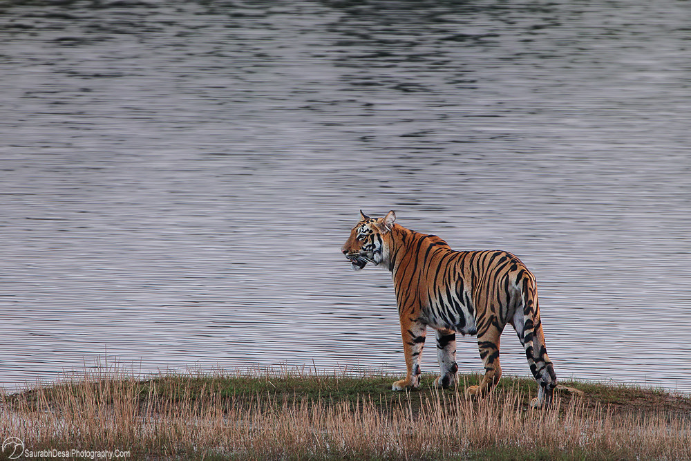 Photograph Life of Pi by Saurabh Desai on 500px