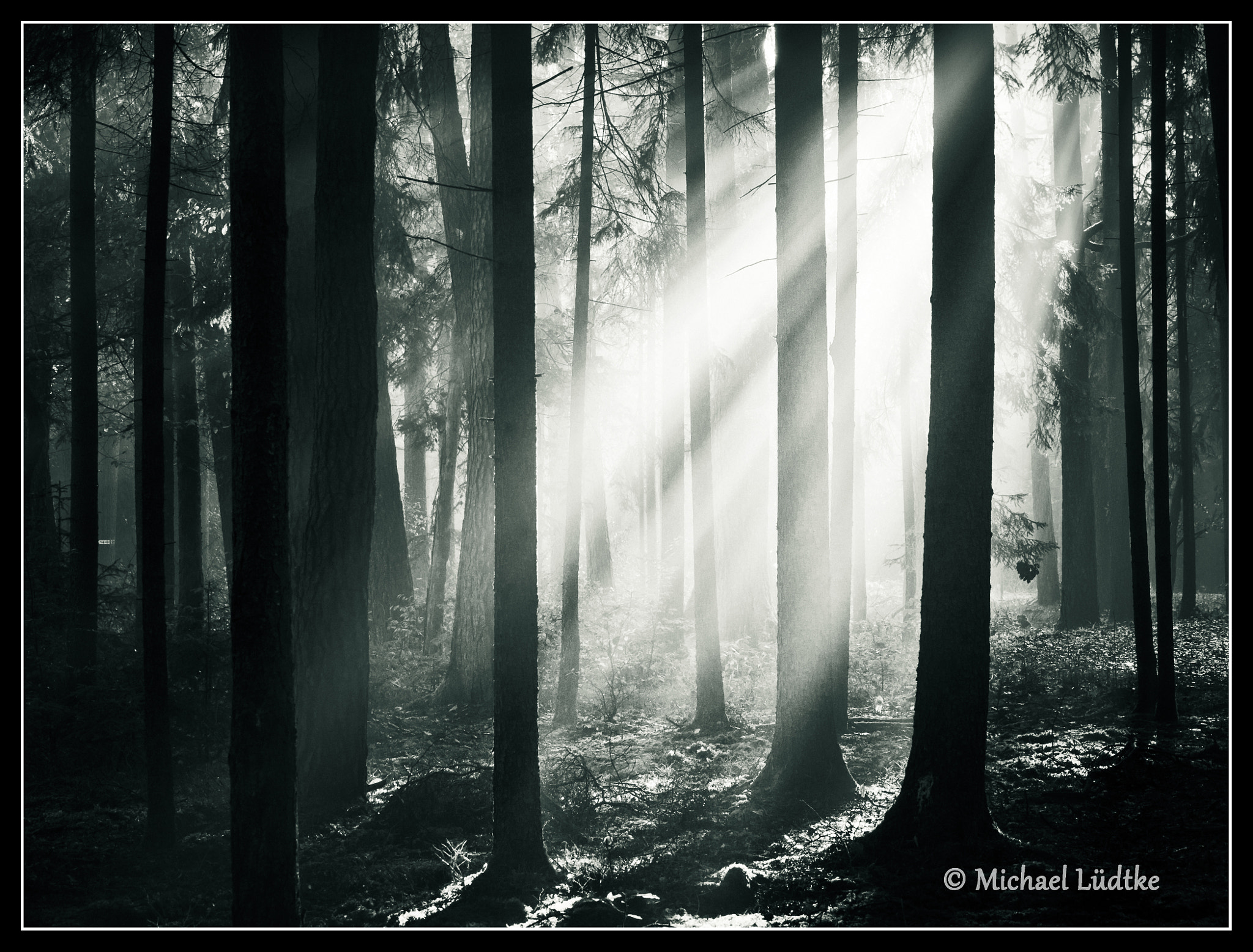 Photograph Light in the Forest by Michael Lüdtke on 500px