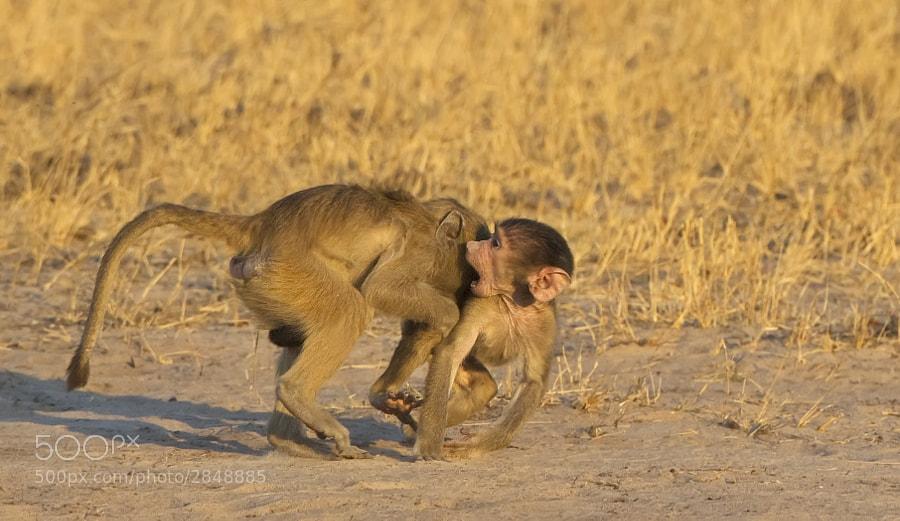 Taken in Hwange National Park, Zimbabwe, 6th September 2011