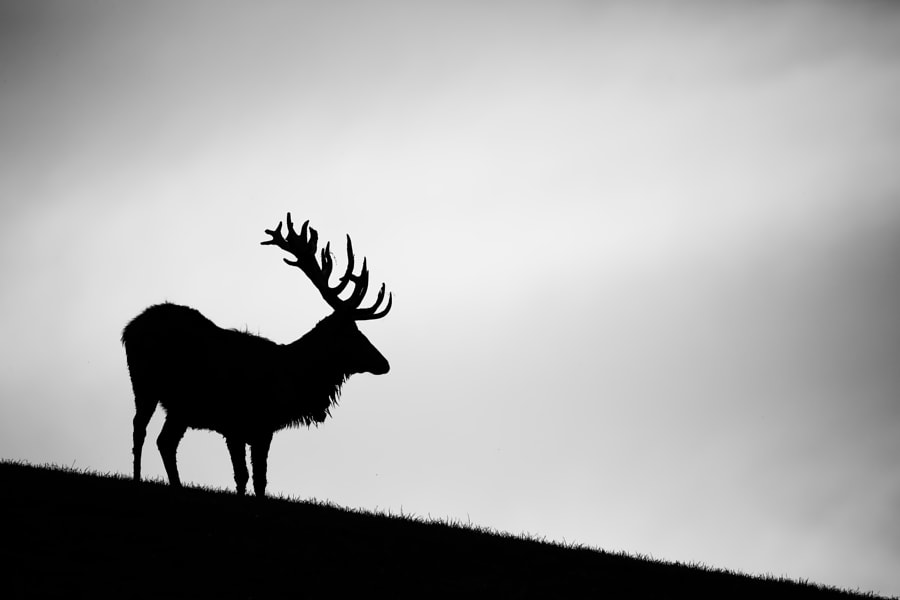 king of the forest by Judith Kuhn on 500px.com