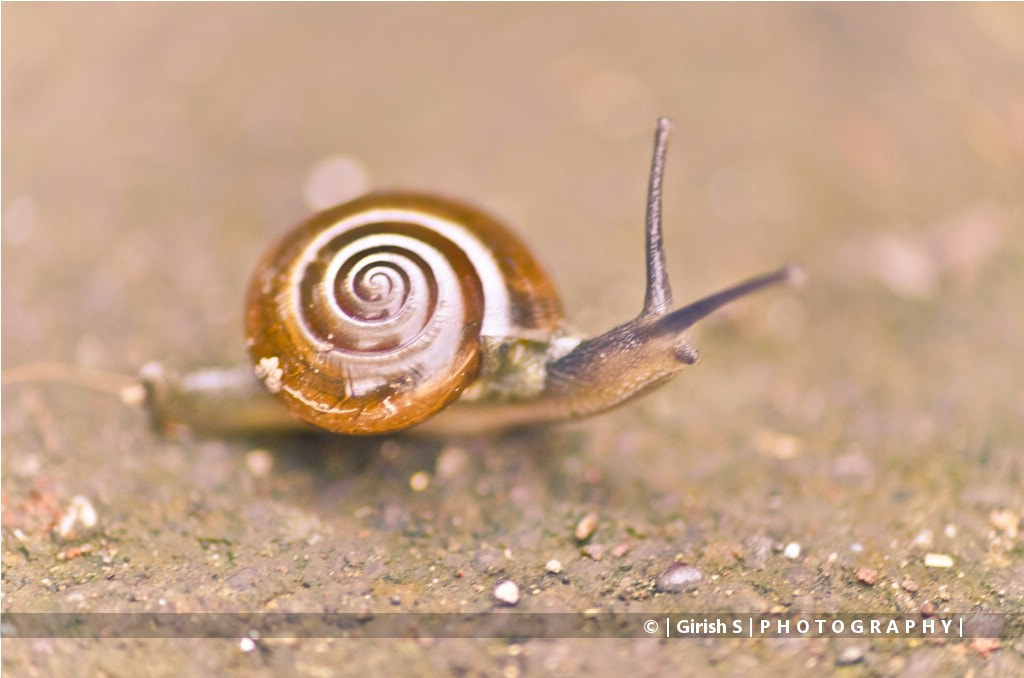 Photograph Snail Walk !!! by Girish Suryawanshi on 500px