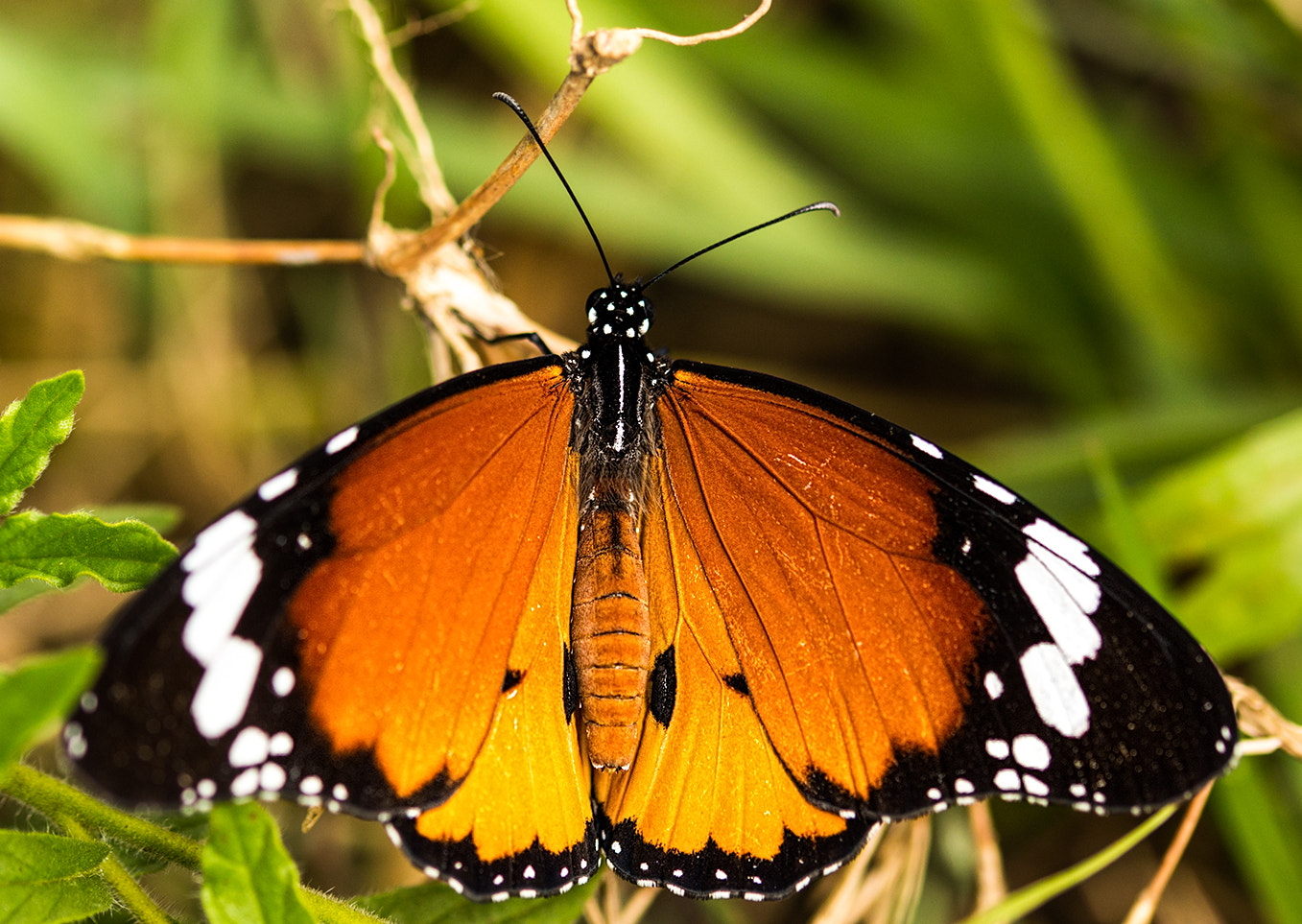 Photograph Butterfly by Roger Fanner on 500px