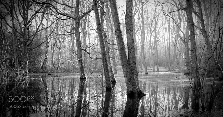 Photograph Misty Morning by Adonis Stevenson on 500px