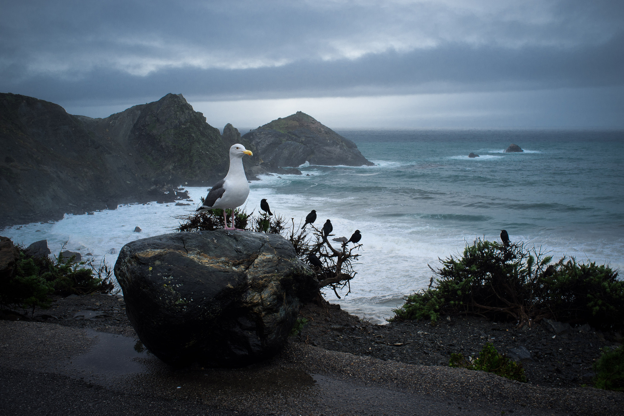 Photograph Bird's view of Highway 1 by Jimmy Peterson on 500px