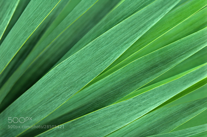 Photograph Green  by Aleksandar Vasic on 500px