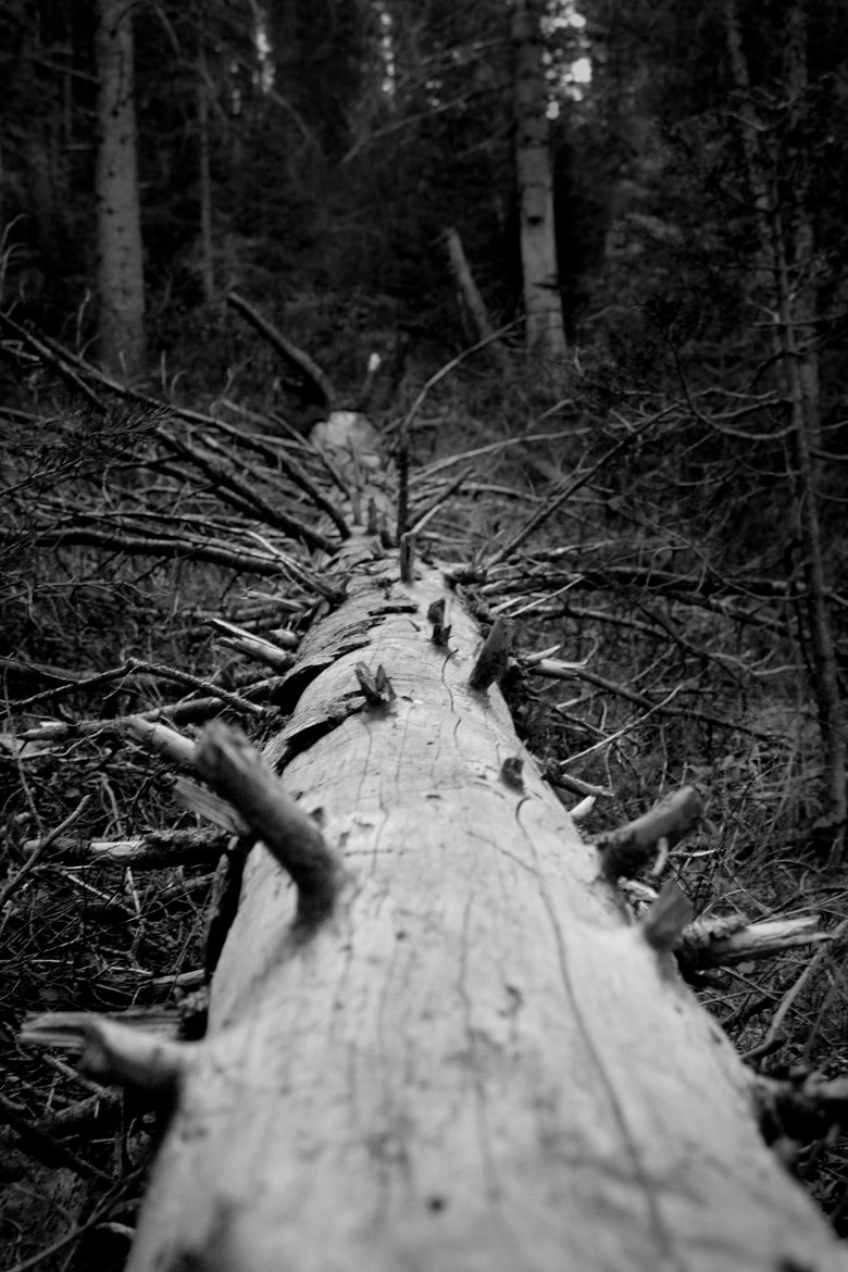 Photograph Fallen Tree by Taylor Allan on 500px