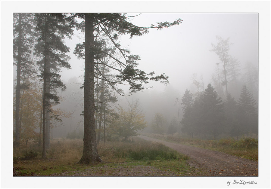 Misty morning in a forest №1
