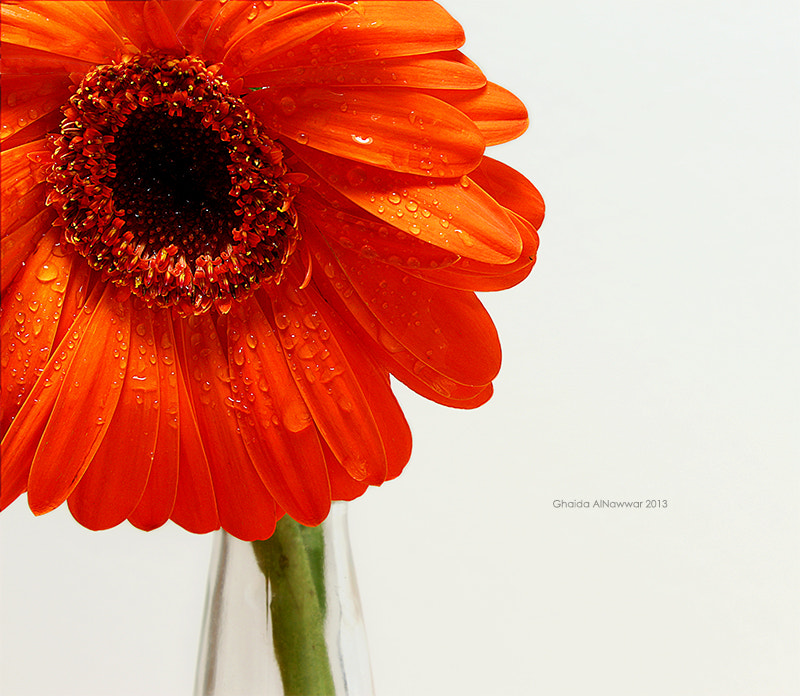 Photograph I'm Orange! by Ghaida AlNawwar on 500px