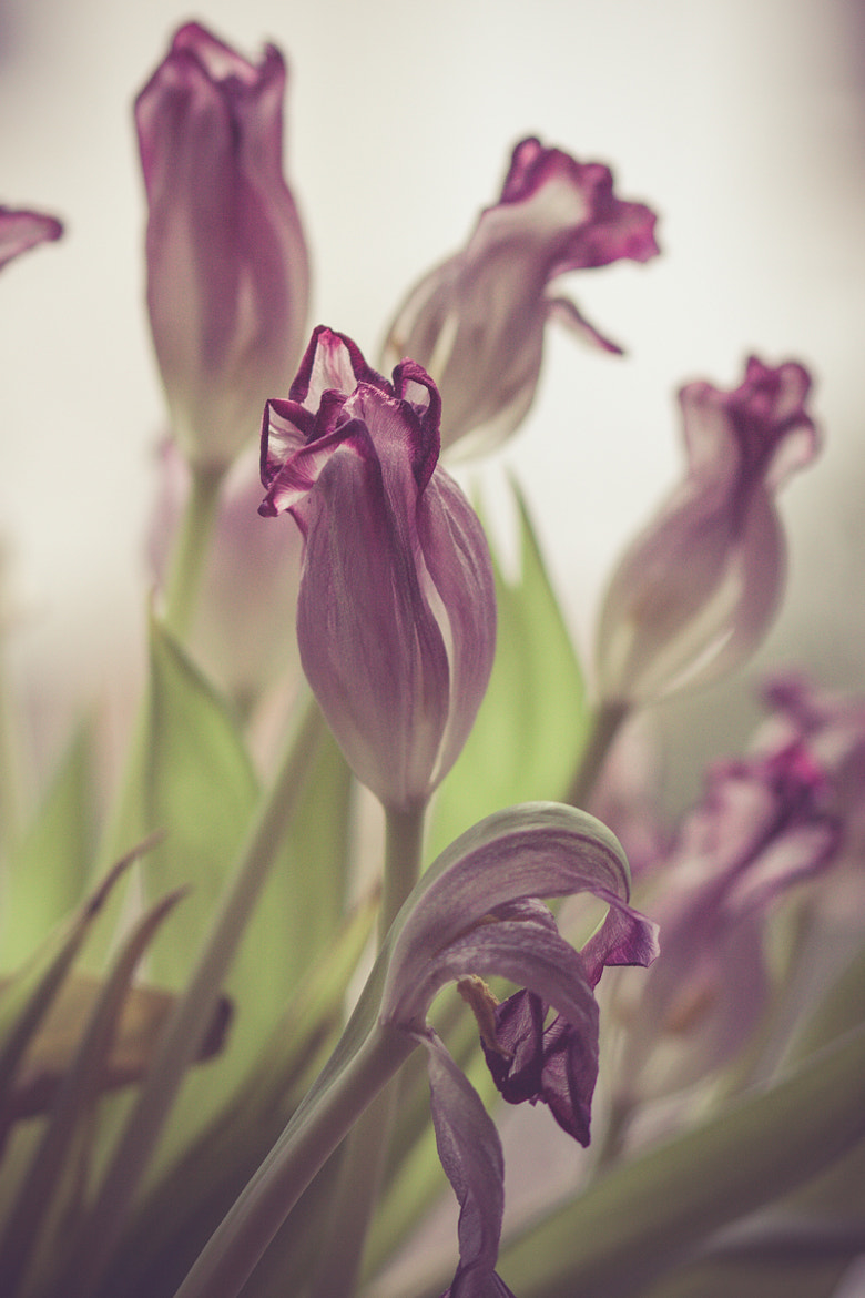 Photograph withered by Andrea Schunert on 500px