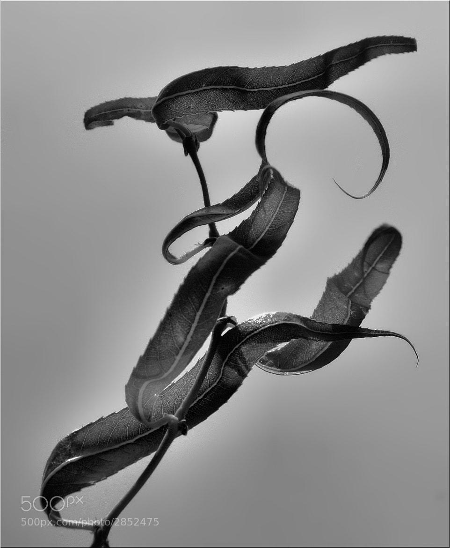 Photograph plasticity   by Silena  Lambertini on 500px