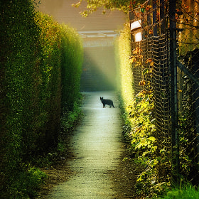 a cat in the alley by David Mar Quinto (DMQ)) on 500px.com