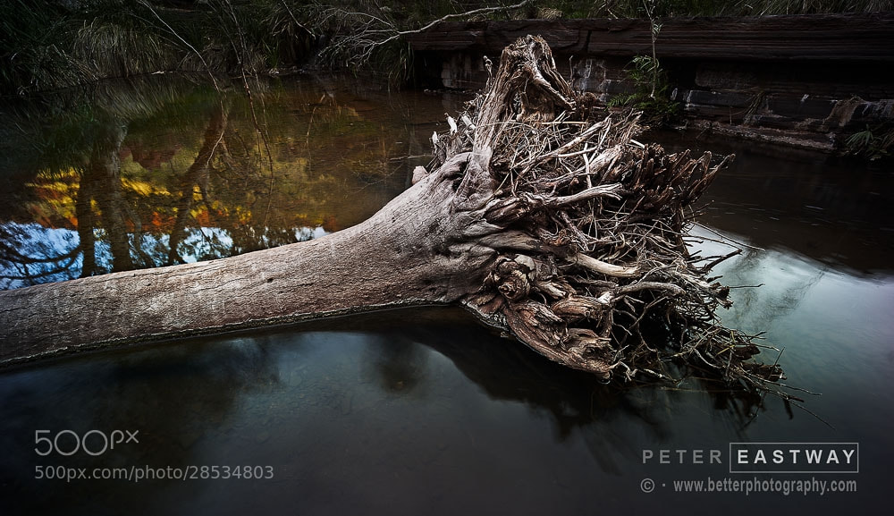 Photograph Fallen Tree Dales Gorge by Peter Eastway on 500px