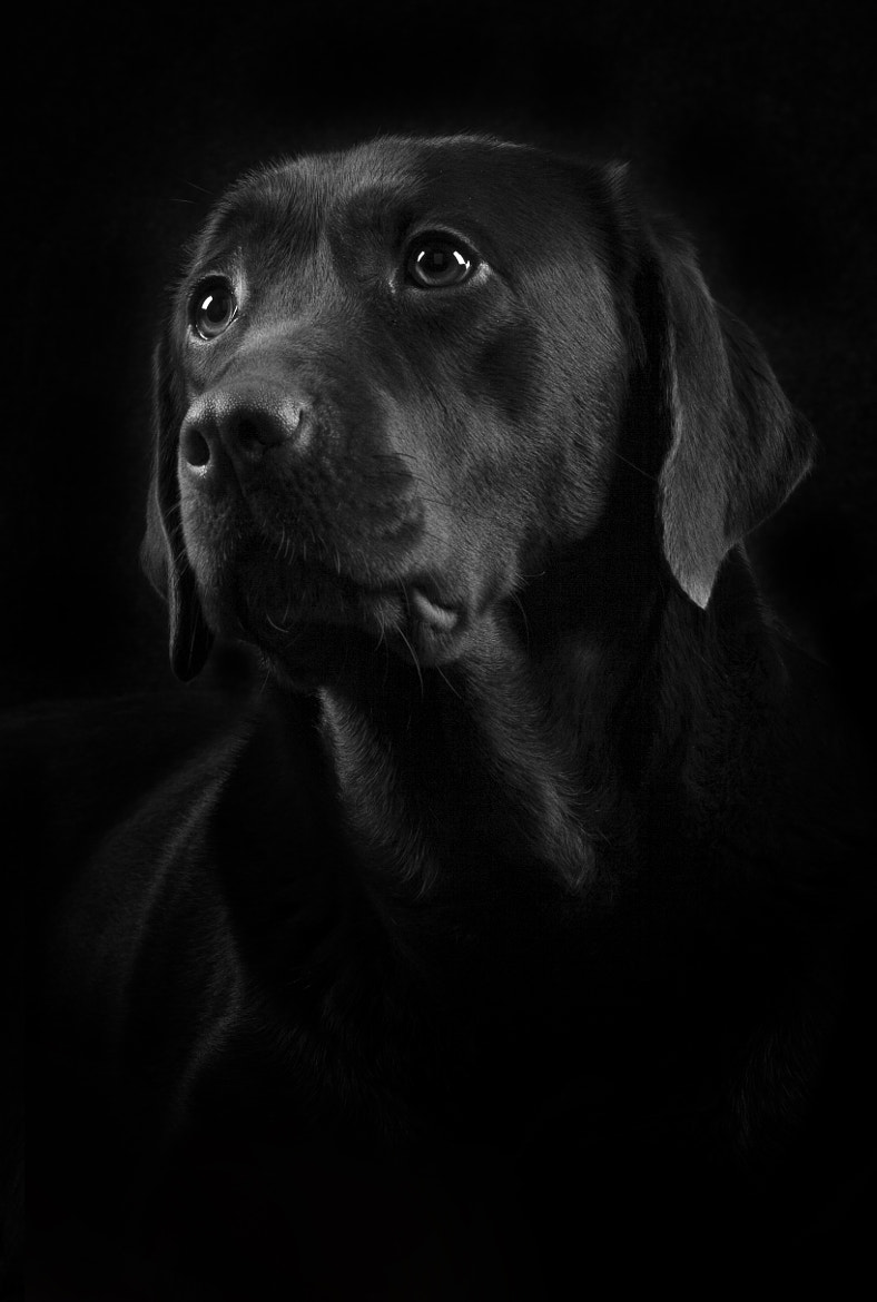 Photograph Black Beauty by Sven Engel on 500px