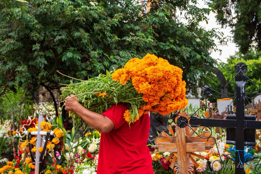 丽贝卡·萨莫拉(Rebeca Zamora)的Tochimilco en el dia de muertos在500px.com
