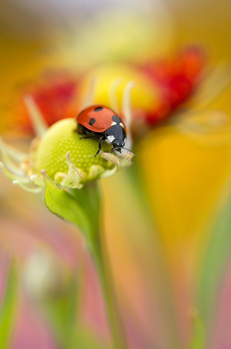 Photograph Flower lady by Mandy Disher on 500px
