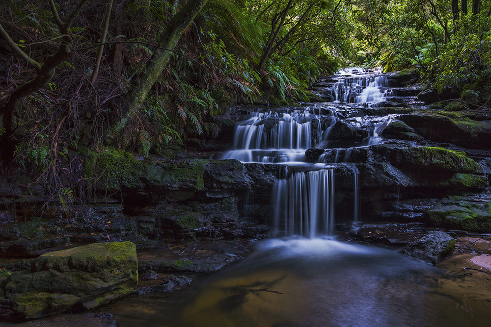 Photograph Leura Softness by Dave Cox on 500px