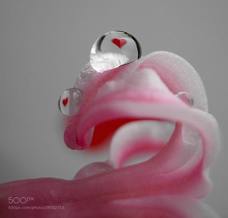 Photograph love drop by tugba kiper on 500px
